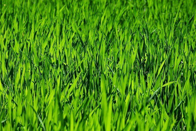 Online marketing for lawn care businesses.